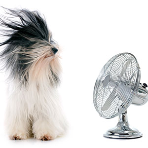 photo of a dog in front of fan